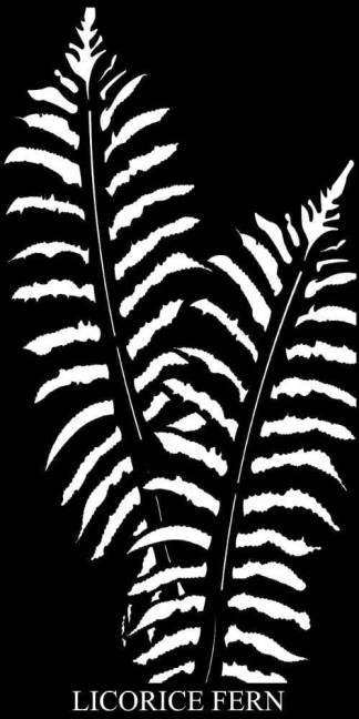 Licorice Fern Laser Cut Decorative Garden Screen